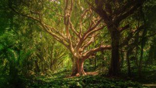 生命の樹 セフィロトの樹 treeoflife treeofsmile