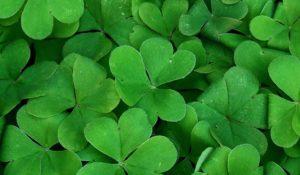 グリーン 色 カラー 12色 生命の樹 セフィロトの樹 treeoflife treeofsmile 生命の樹カウンセリング
