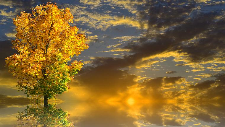 生命の樹 セフィロトの樹 treeoflife treeofsmile 生命の樹カウンセリング Tree of Life Counseling 生命の樹リーディング 秋