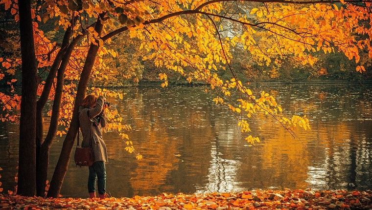 生命の樹 セフィロトの樹 treeoflife treeofsmile 生命の樹カウンセリング Tree of Life Counseling 生命の樹リーディング 秋 女性